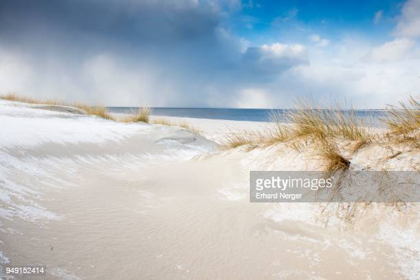 Dunes with beach grass and snow, North Sea, Langeoog, East Frisia, Lower Saxony, Germany