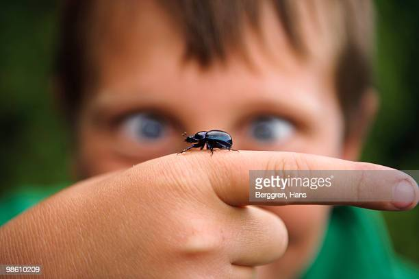 a dung beetle crawling on the hand of a child, sweden. - beetle stock pictures, royalty-free photos & images