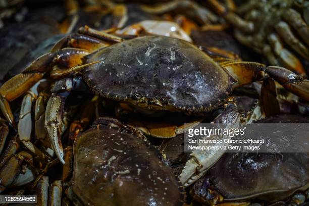 Dungeness crab at Fisherman's Wharf on Pier 45 in San Francisco, California, on Sunday, Dec. 15, 2019. New state regulations designed to prevent...