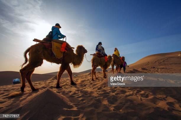 dunhuang desert, gansu - camel active stock-fotos und bilder