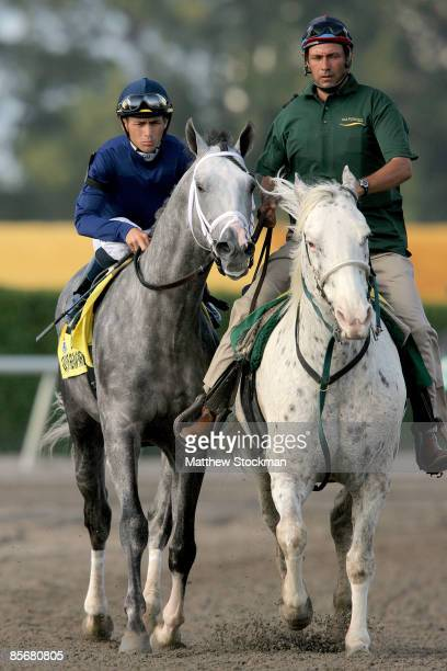 Dunkirk ridden by jockey Garrett Gomes is led to the starters gate before racing in the Florida Derby at Gulfstream Park on March 28 2009 in...