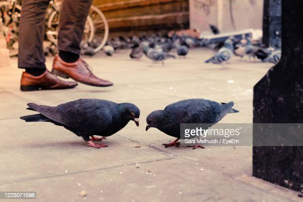 a duo of birds on pavement with shoes walking past - low section stock pictures, royalty-free photos & images