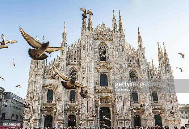 duomo of milan and pigeons - cathedral stock pictures, royalty-free photos & images