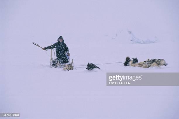 Durant le long hiver arctique les groenlandais de la coteest du Groenland utilisent toujours leurs chiens pour se deplacer chasser ou pecher Chaque...