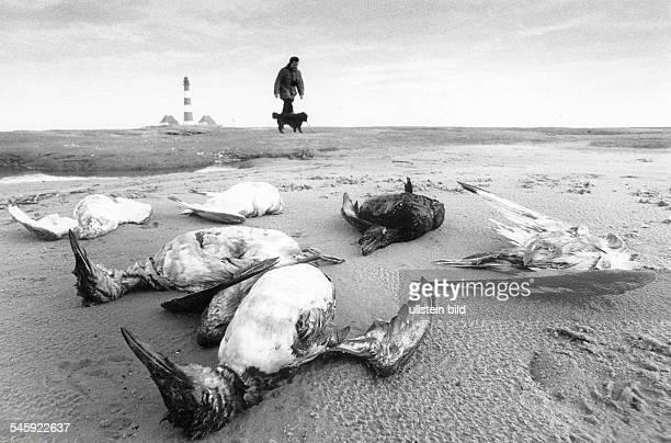 Durch Wasserverschmutzung verendeteSeevögel an der Nordseeküste 1988