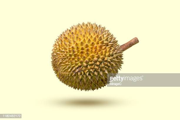 durian levitation on colored background - thorn stock pictures, royalty-free photos & images