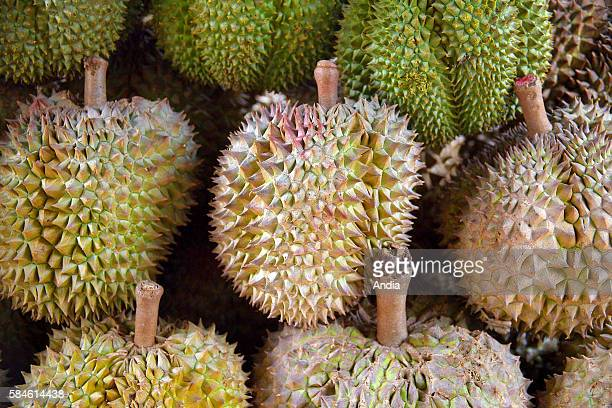 Durians are Asian exotic fruits which have an horrible odor but are nevertheless highly appreciated in the country They are often forbidden in stores...