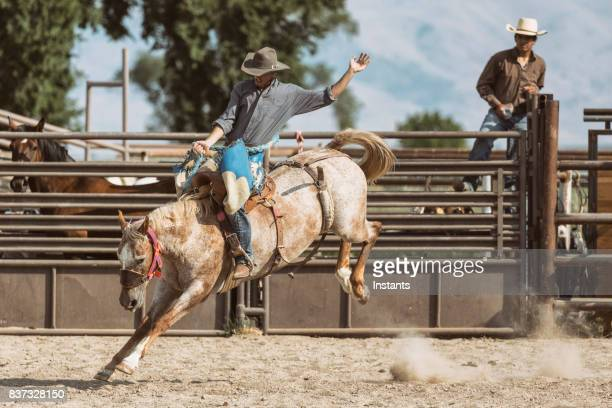 during a rodeo, view of a cowboy saddle bronc riding on a bucking horse. - bucking stock photos and pictures