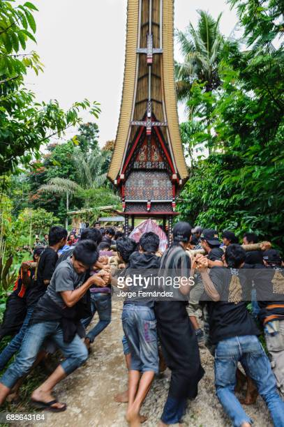 During a traditional ritual funeral of the Tana Toraja the men of the village carry the catafalque in a weird funeral procession in which the people...