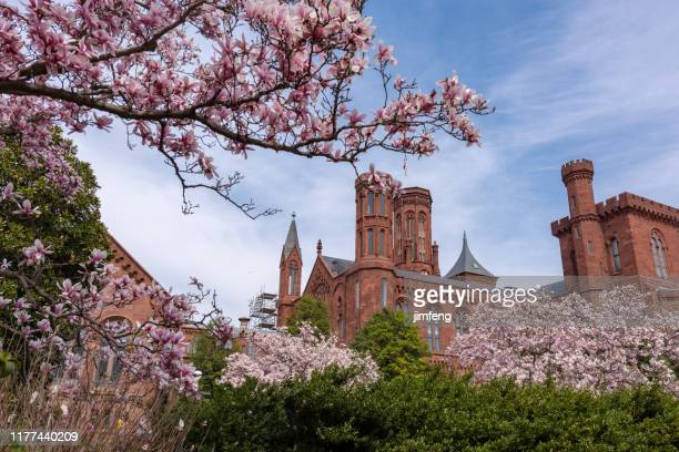 during national cherry blossom festival, flowers in the moongate garden of washington, usa. - smithsonian institution stock pictures, royalty-free photos & images