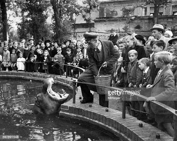 During the Allied raids on Berlin the Zoo was badly damaged and this animal from South Africa Submerged under water and since is rarely seen out of...