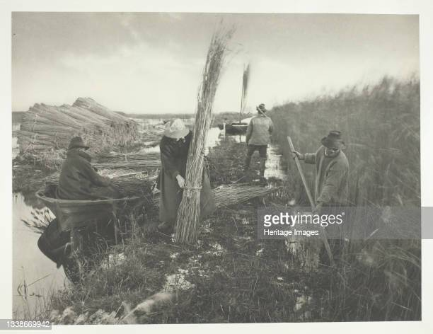During the Reed Harvest, 1886. A work made of platinum print, pl. Xxviii from the album 'life and landscape on the norfolk broads' ; edition of 200....