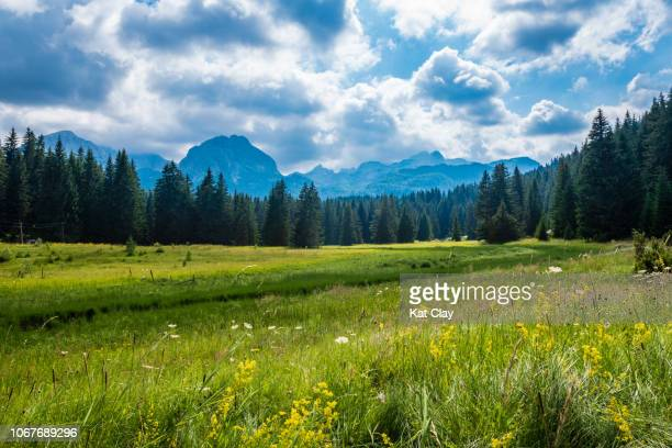 durmitor national park, montenegro - meadow stock pictures, royalty-free photos & images