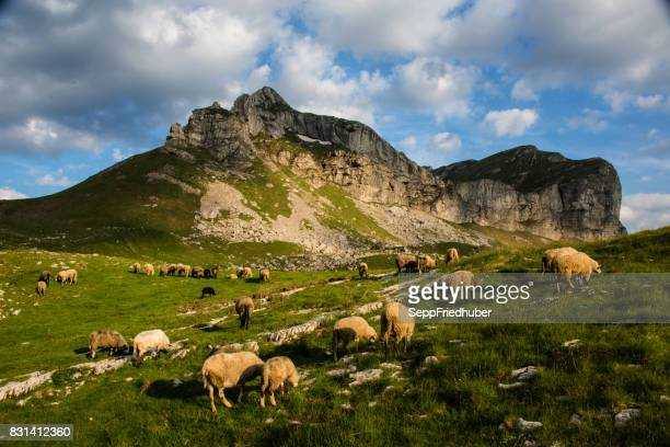 durmitor nationalpark montenegro - landschaft stock pictures, royalty-free photos & images