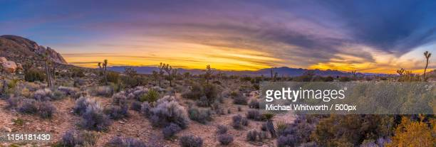 dusk from ryan mountain - joshua tree stock photos and pictures
