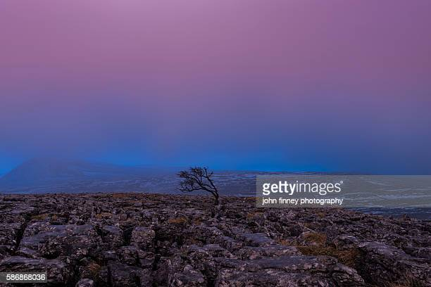 Dusk on Twistleton Scar with Ingleborough fell in the distance. Yorkshire Dales. UK.