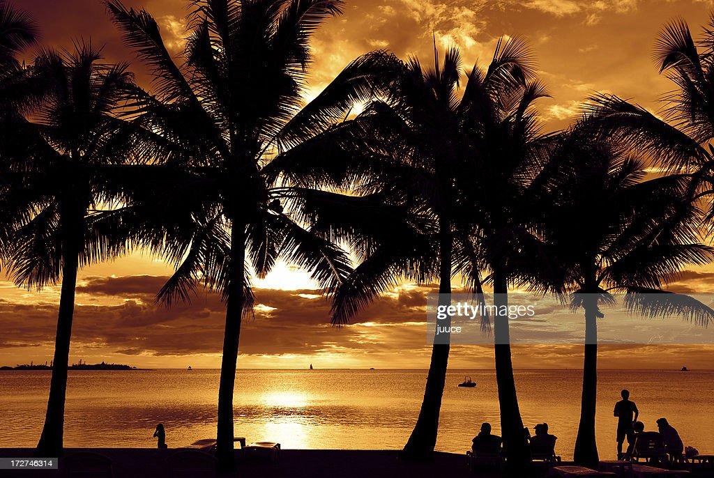 Dusk Sunset Palms at Noumea : Stock Photo