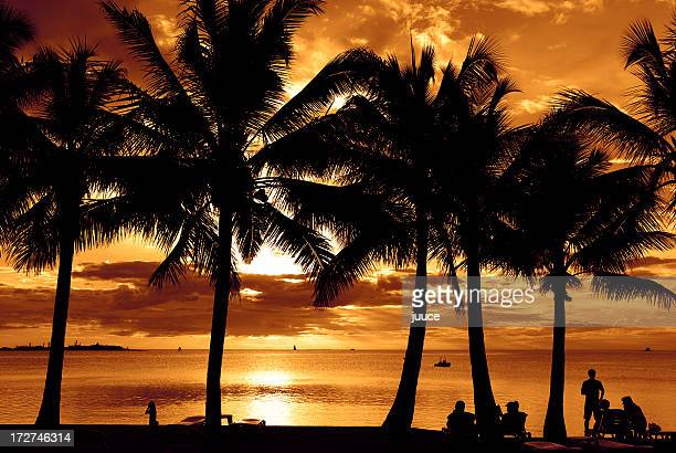 dusk sunset palms at noumea - new caledonia stock photos and pictures