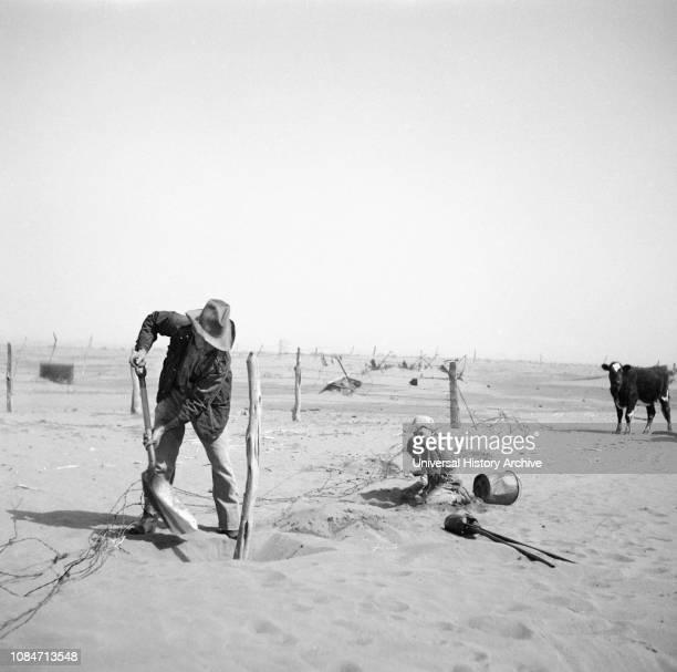 Dust Bowl Farmer Raising Fence to keep it from being Buried under Drifting Sand Cimarron County Oklahoma USA Arthur Rothstein Farm Security...