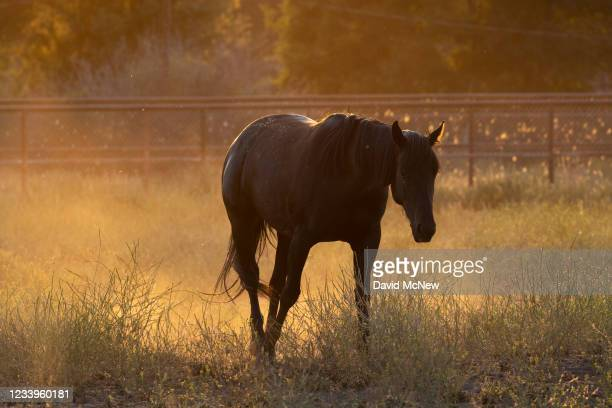 Dust rises around a horse as drought conditions worsen on July 12, 2021 near Glennville, California. Authorities are bracing for a predicted driest...