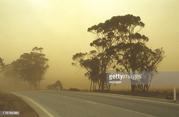 Dust storm almost obscuring road and trees Northern Wheat belt Western Australia