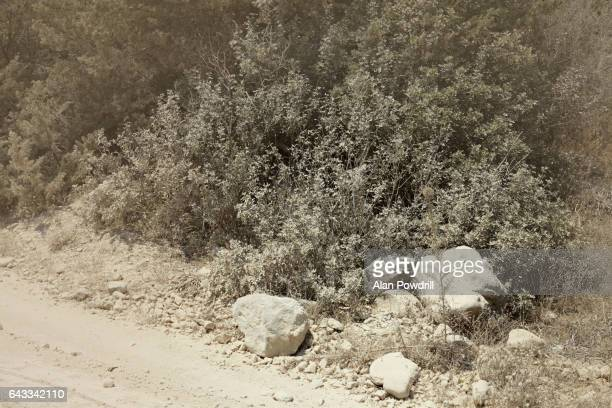 Dust Track and Dry Bushes