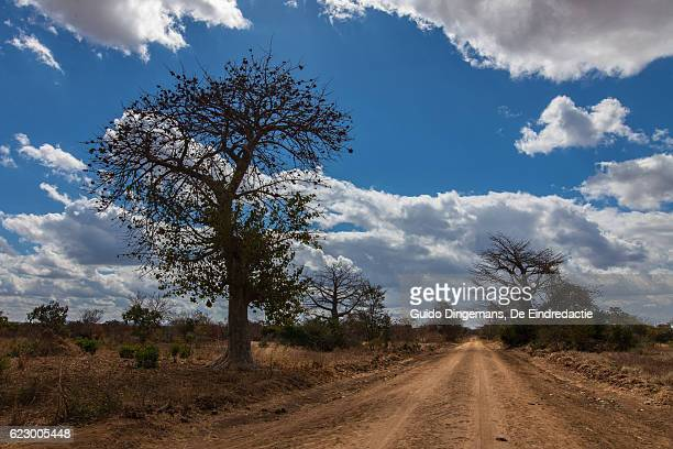 dusty dirt road in southern malawi - un food and agriculture organization stock pictures, royalty-free photos & images