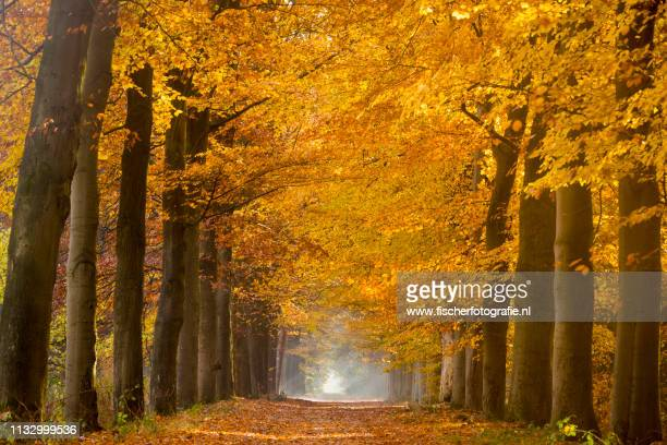 dutch autumn colors without photoshop - blad stock pictures, royalty-free photos & images