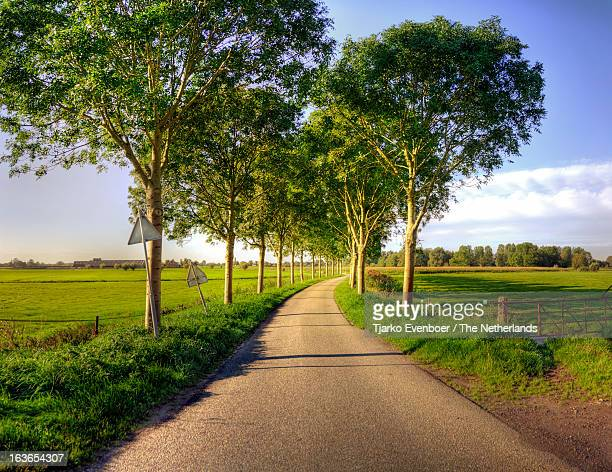 Dutch country road during summer