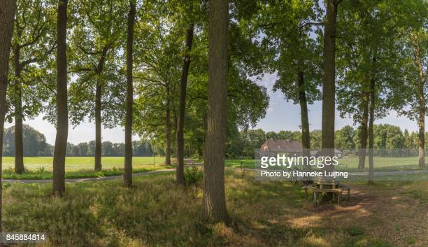 dutch countryside in overijssel - overijssel stock photos and pictures