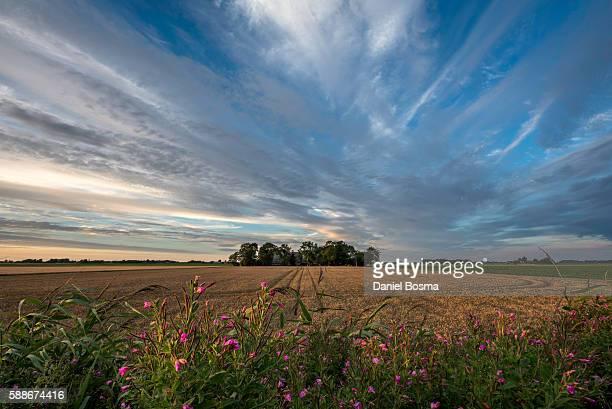 dutch farm seen from a old dike - groningen provincie stockfoto's en -beelden