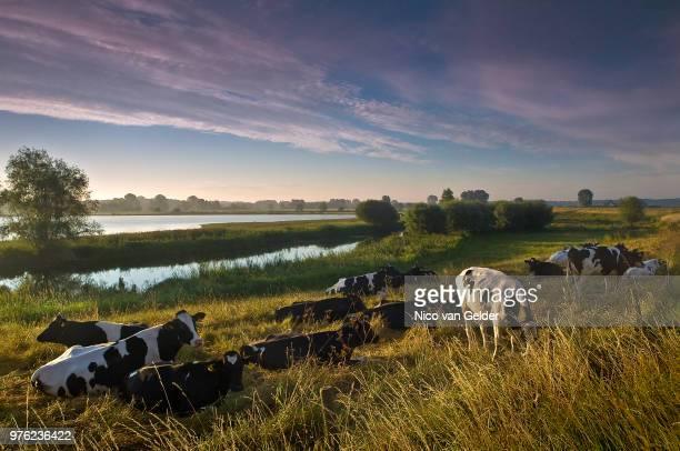 Dutch landscape near the IJssel