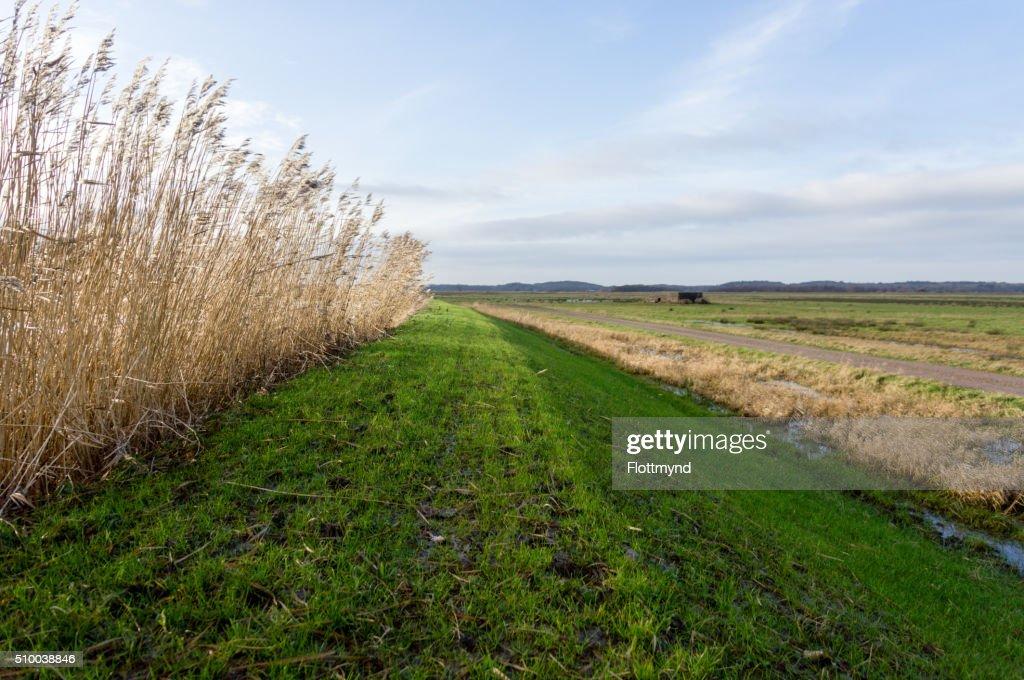 dutch landscape ストックフォト getty images