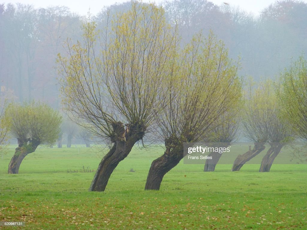 Dutch landscape with willows : Stockfoto