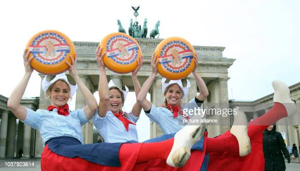 Dutch Meisjes hold cheese wheels for the Green Week agriculture trade fair at the Brandenburg Gate in Berlin Germany 17 January 2013 The Netherlands...