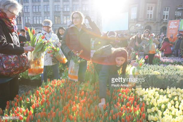 Dutch National Tulip Day in Amsterdam