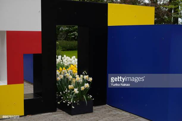 Dutch painter Piet Mondrian style flower design artwork is displayed at the Keukenhof the world's largest flower and tulip garden park on May 10 2017...