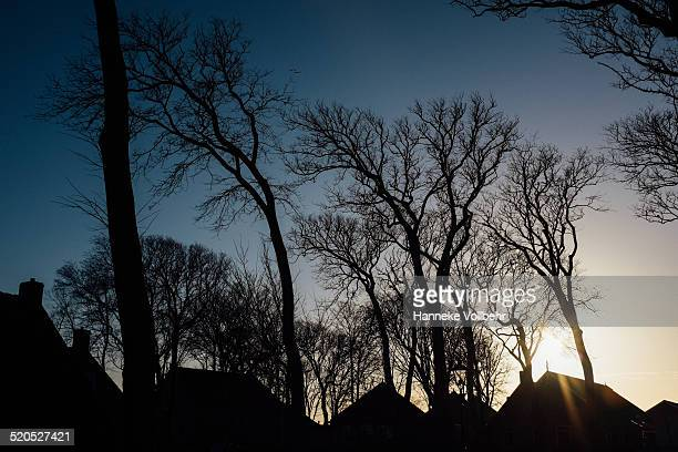 Dutch silhouette houses with trees at sunset