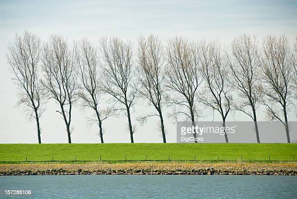 Dutch Treelined Dike