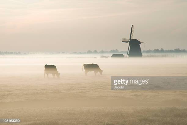 dutch windmill on farm in mist - traditional windmill stock photos and pictures