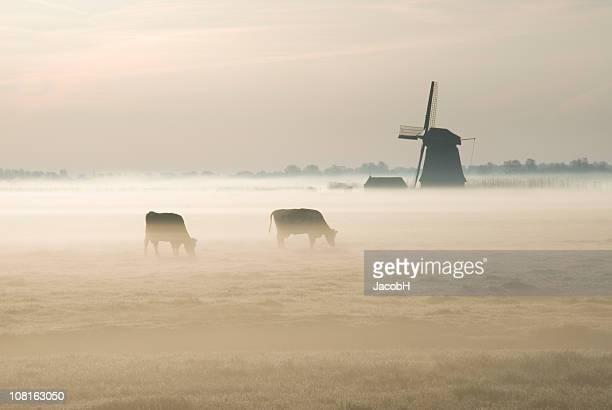Holländische Windmühle auf der Farm in Nebel