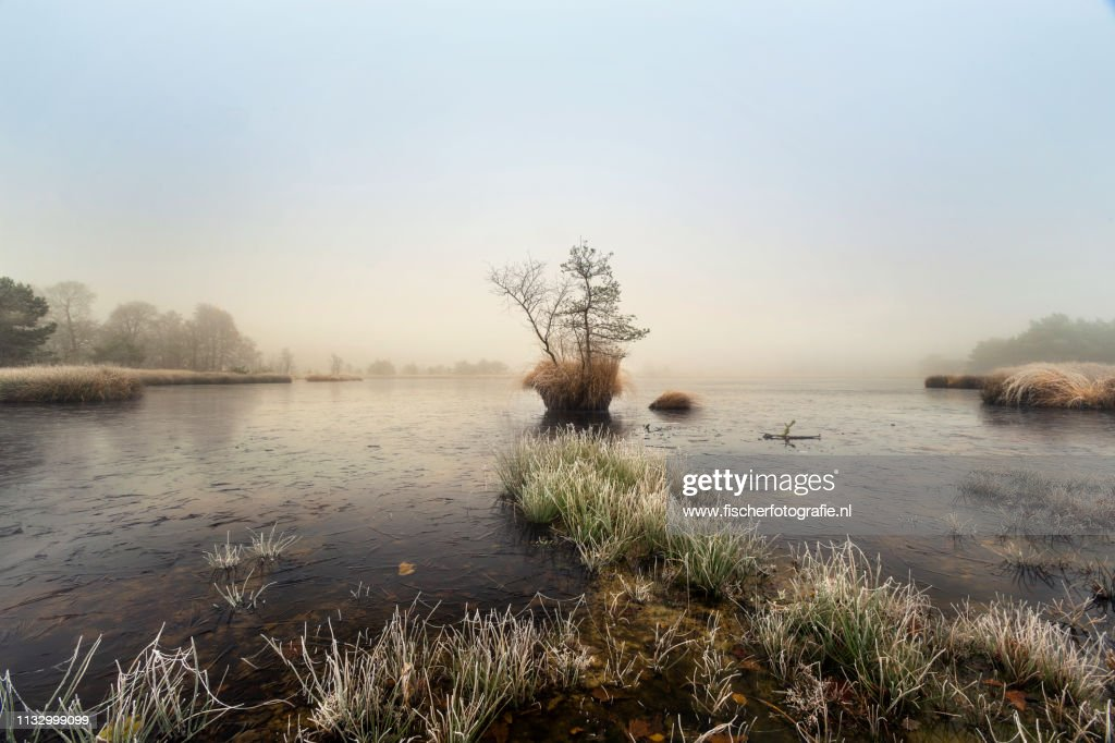 Dutch winter in the wood : Stock Photo