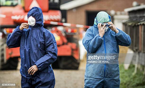 Dutch workers in protective gear get ready to cull ducks as part of prevention measures against bird flu at a duck farm in Hierden on November 27...