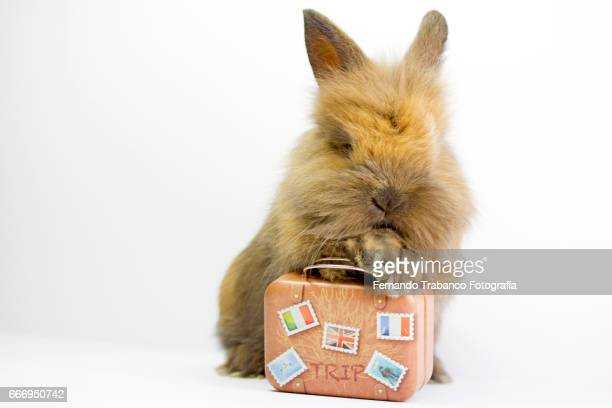 Dwarf rabbit with a suitcase to go on vacation and relax