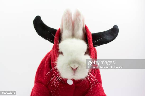 Dwarf rabbit with horned disguise, Oryctolagus cuniculus domesticus