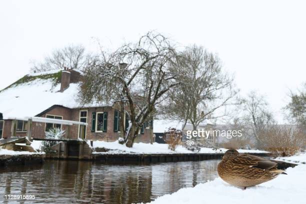 Dwarsgracht near Giethoorn village with the canals with snow during a cold but beautiful calm winter day