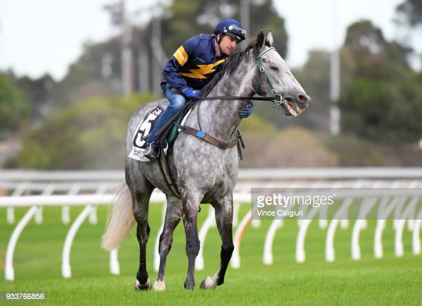 Dwayne Dunn riding champion sprinter Chautauqua before refusing to jump again during Cranbourne Barrier Trials on March 19 2018 in Melbourne Australia