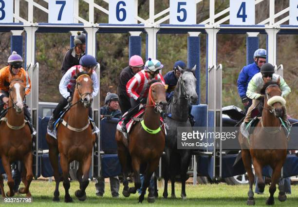 Dwayne Dunn riding champion sprinter Chautauqua refuses to jump again during Cranbourne Barrier Trials on March 19 2018 in Melbourne Australia