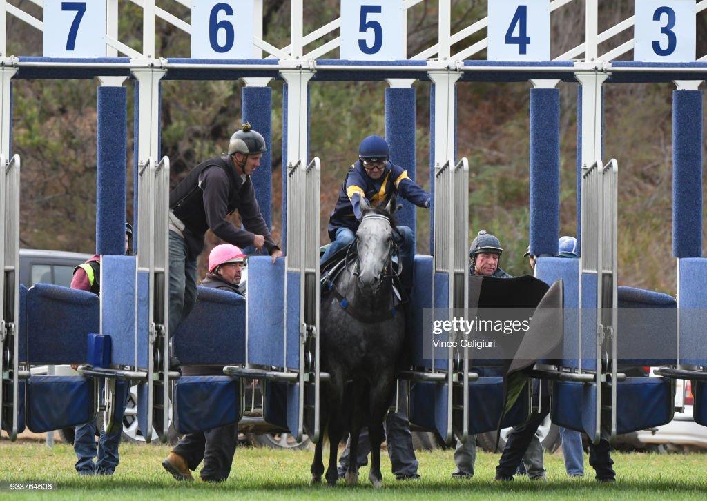 Dwayne Dunn riding champion sprinter Chautauqua refuses to jump again during Cranbourne Barrier Trials on March 19, 2018 in Melbourne, Australia.