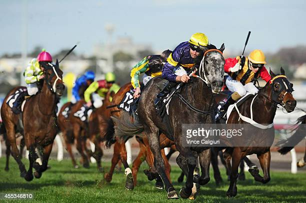 Dwayne Dunn riding Chautauqua wins Race 8 the Bobby Lewis Quality during Melbourne Racing at Flemington Racecourse on September 13 2014 in Melbourne...